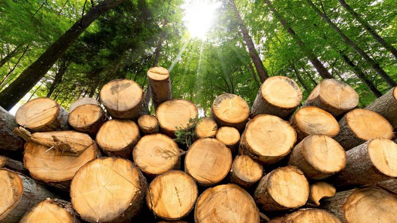 A Carthage man was arrested and charged with timber theft.