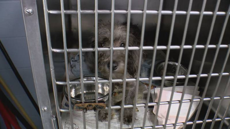 The Humane Society of Northwest Louisiana is a no-kill, dog-only rescue in Shreveport, La.