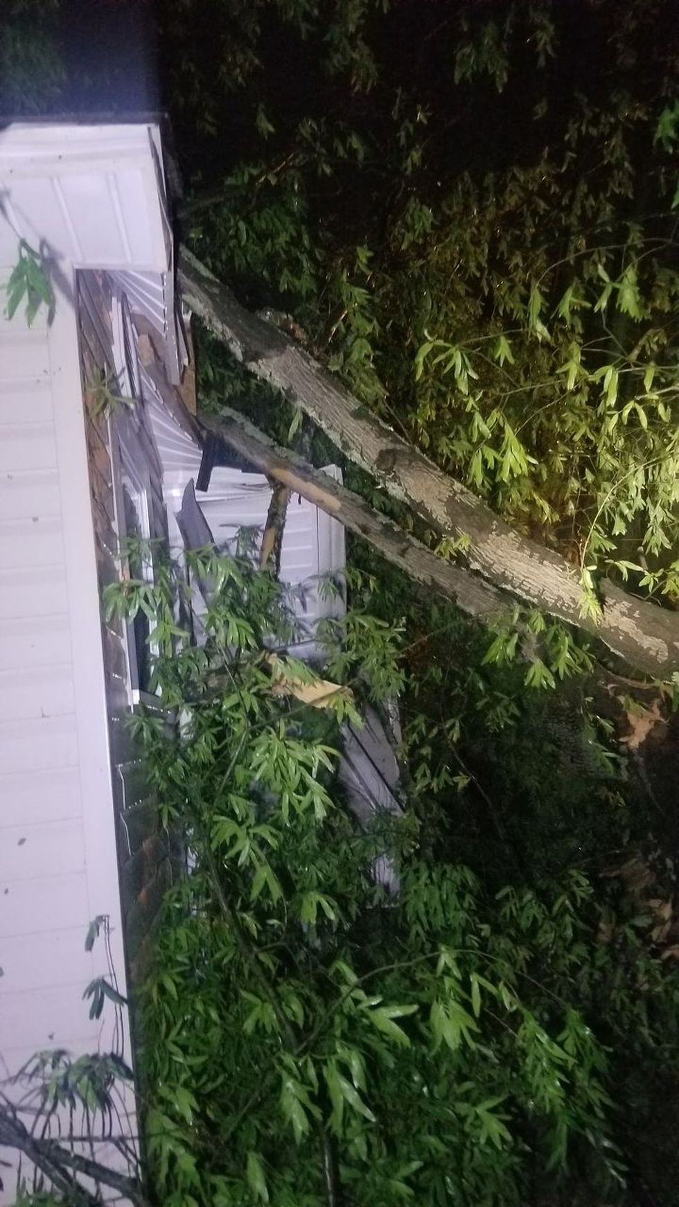 KSLA News 12 viewer Antwion Collins shared this image of a tree downed in Texarkana during...