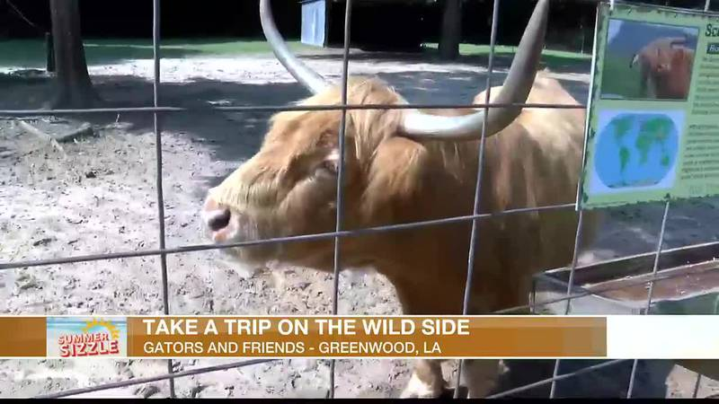 See some exotic animals with the family at Gators & Friends in Greenwood