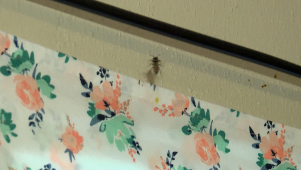 Tenant says bees have taken over her apartment