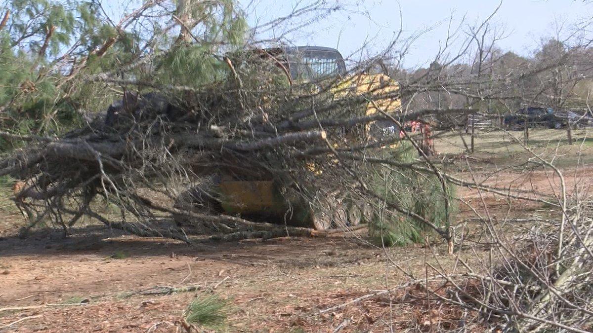 Hurricane Season damaged and destroyed many trees