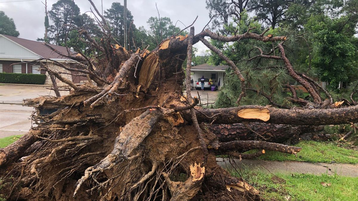 A tree blocks a roadway in the Sunset Acres neighborhood following storms in the early morning...