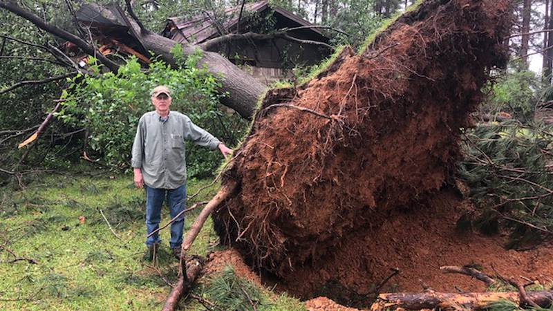 A tree uprooted from Fouke, Ark.