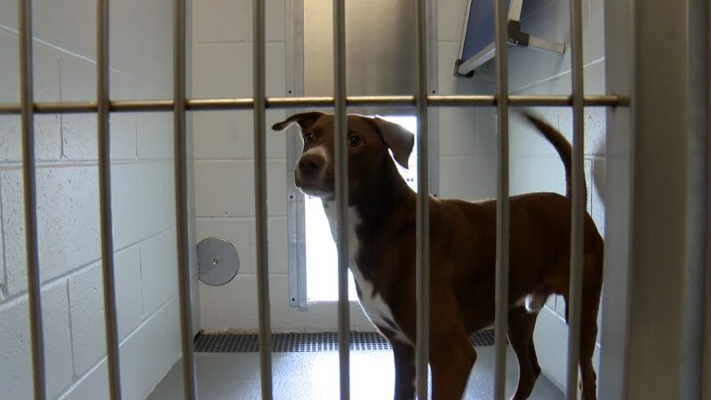 A grand opening ceremony was held Monday, Aug. 9, 2021 for the newly built Marshall Pet...