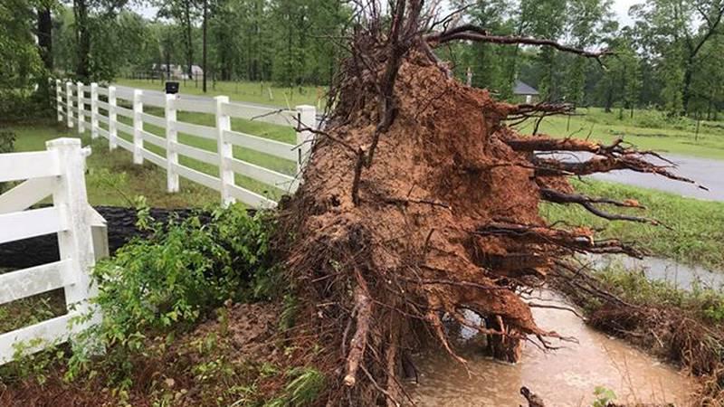 Tree damage in Benton, LA