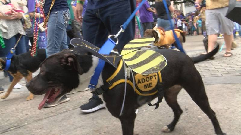The parade, hosted by Capital Area Animal Welfare Society (CAAWS), features dogs dressed in...