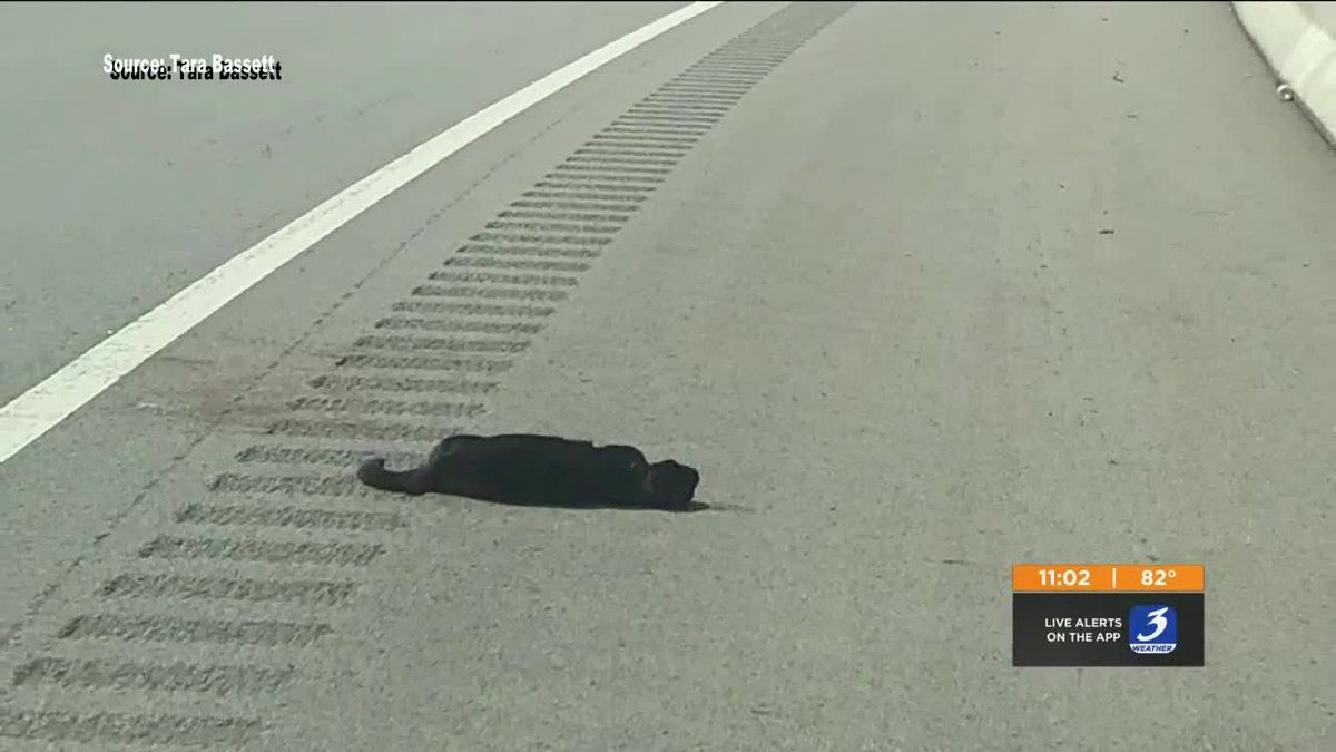 Someone threw a cat out of a moving car on the interstate on Saturday.