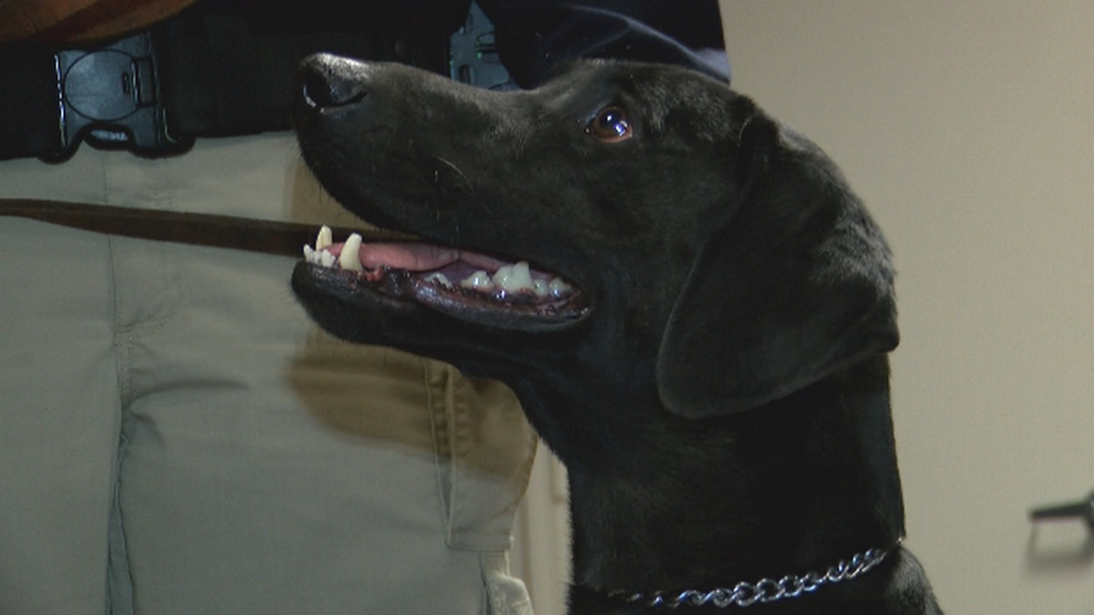 The Caddo Parish Sheriff's Office welcomed its newest, four-legged deputy to the department,...