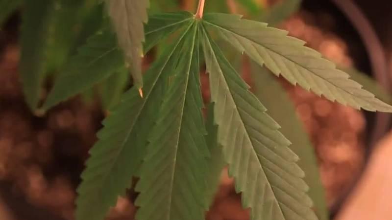 Lawmakers try to spend Louisiana's medical marijuana program