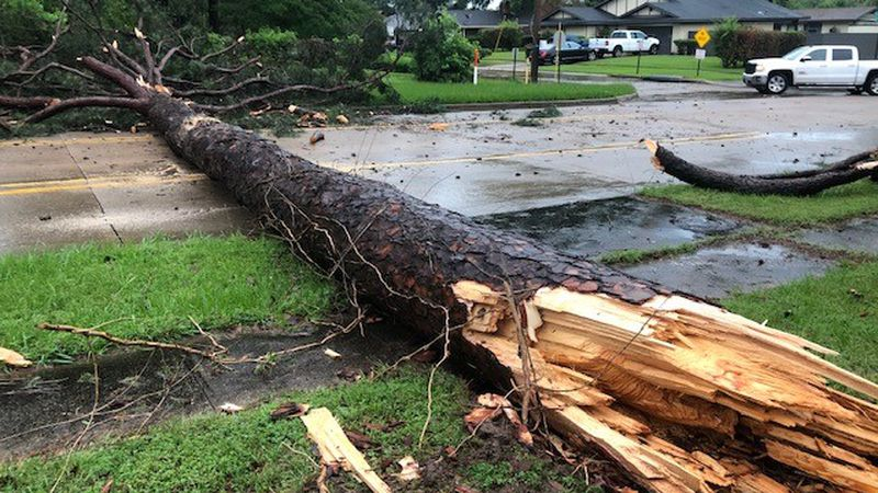 Severe weather on Monday, June 7, 2021 caused this tree to fall near the intersection of E...